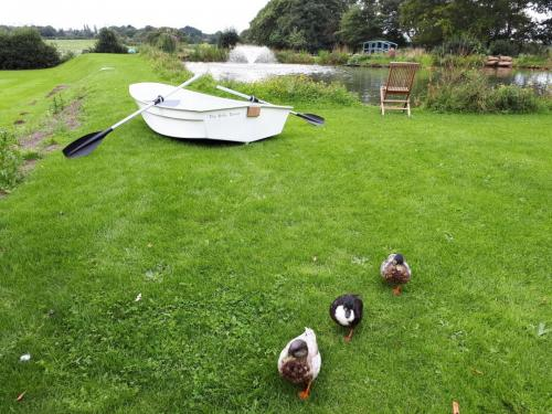 white-dinghy-with-ducks